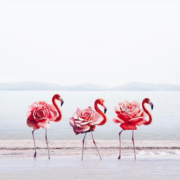 Photoshop; Flamingo; hey.luisa; Marketing Digital; Portugal