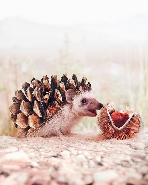 Photoshop; Ourico; hey.luisa; Natureza; Criatividade
