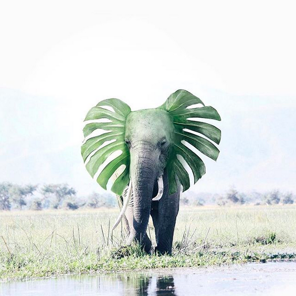 Photoshop; Elefante; hey.luisa; Redes Sociais; Web Design