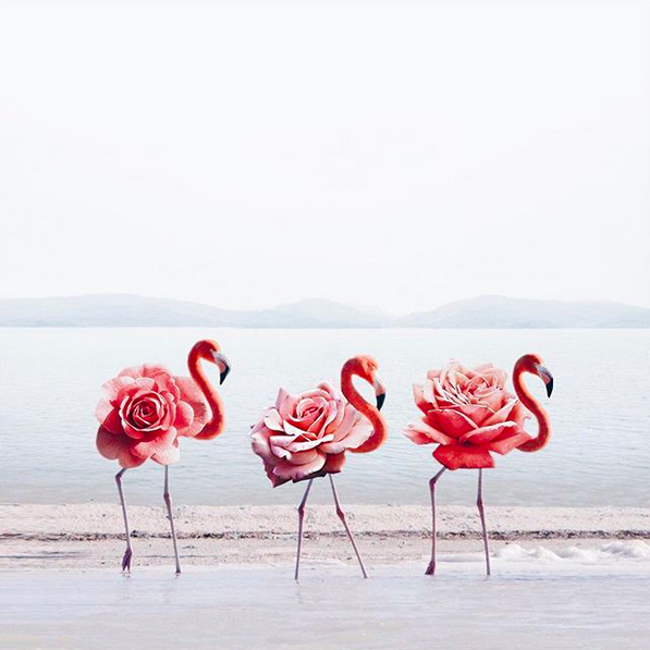 Photoshop; Flamingo; hey.luisa; Marketing Digital; Portugal